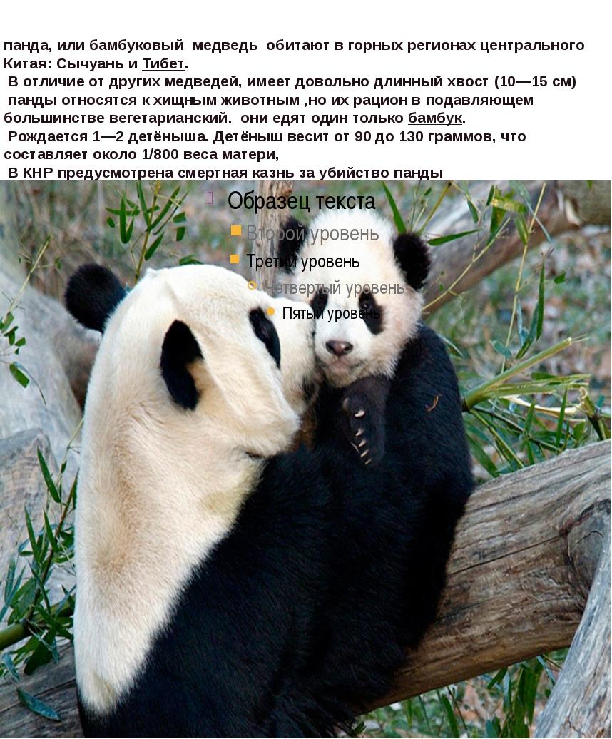 панда, илибамбуковый медведь обитают вгорныхрегионах центрального Китая:...