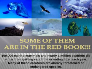 100,000 marine mammals and nearly a million seabirds die either from getting
