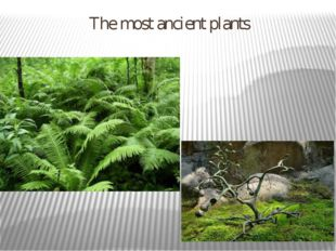 The most ancient plants