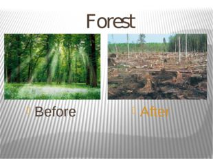 Forest Before After
