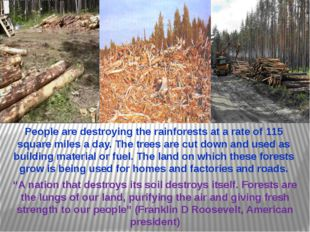 """""""A nation that destroys its soil destroys itself. Forests are the lungs of ou"""