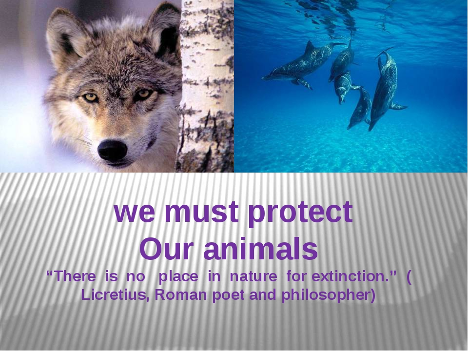 """we must protect Our animals """"There is no place in nature for extinction."""" (..."""