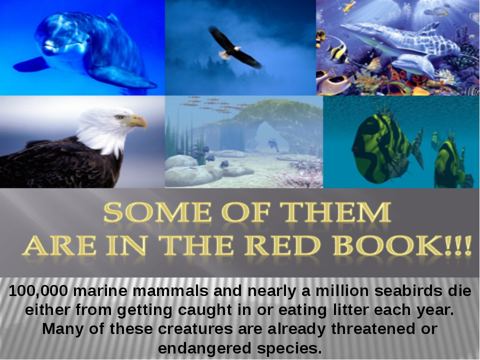 100,000 marine mammals and nearly a million seabirds die either from getting...
