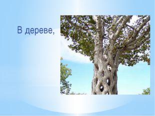 В дереве,