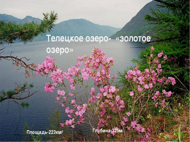 Телецкое озеро- «золотое озеро» Площадь-223км2 Глубина-325м.