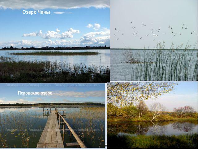 Озеро Чаны Псковское озеро