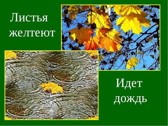 Листья желтеют Идет дождь