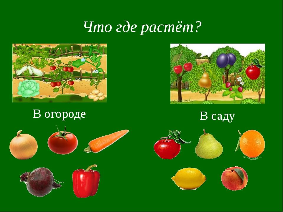 Что где растёт? В огороде В саду