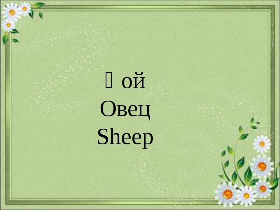 Қой Овец Sheep