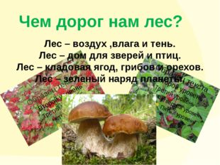 Чем дорог нам лес? Лес – воздух ,влага и тень. Лес – дом для зверей и птиц. Л