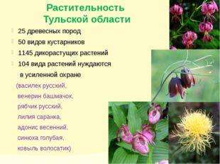 Растительность Тульской области 25 древесных пород 50 видов кустарников 1145