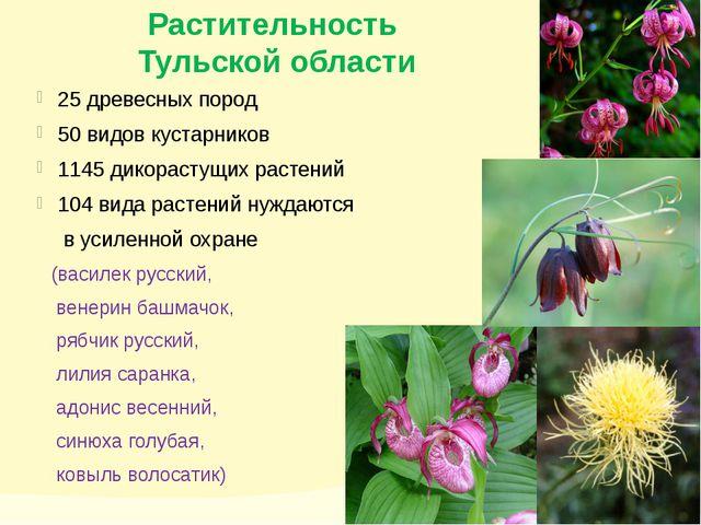 Растительность Тульской области 25 древесных пород 50 видов кустарников 1145...