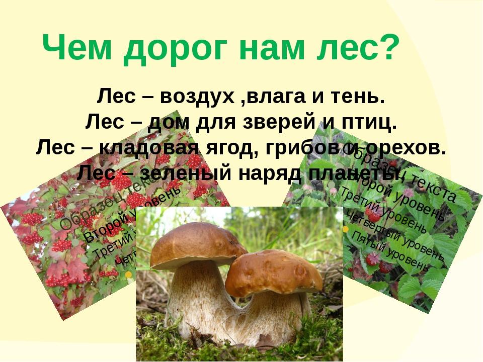 Чем дорог нам лес? Лес – воздух ,влага и тень. Лес – дом для зверей и птиц. Л...
