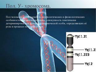 Пол. У- хромосома. Пол человека — совокупность морфологических и физиологиче