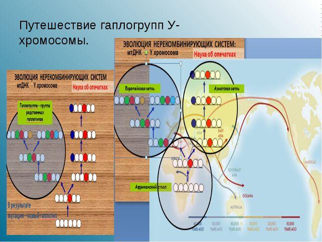 . ППутешествие гаплогрупп У- хромосомы.