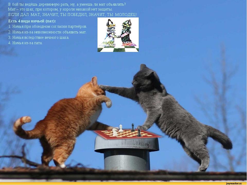 В бой ты ведёшь деревянную рать, ну, а умеешь ли мат объявлять? Мат – это шах...