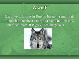 A wolf It is a wolf. It lives in Russia. It|s got a small tail and shark teet