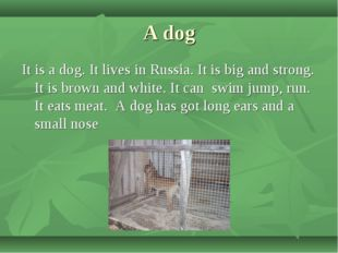 A dog It is a dog. It lives in Russia. It is big and strong. It is brown and