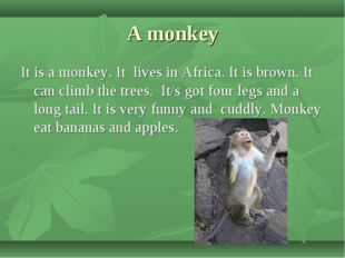 A monkey It is a monkey. It lives in Africa. It is brown. It can climb the tr