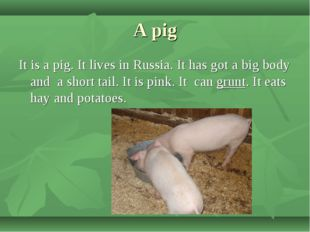A pig It is a pig. It lives in Russia. It has got a big body and a short tail