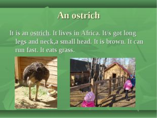 An ostrich It is an ostrich. It lives in Africa. It/s got long legs and neck,