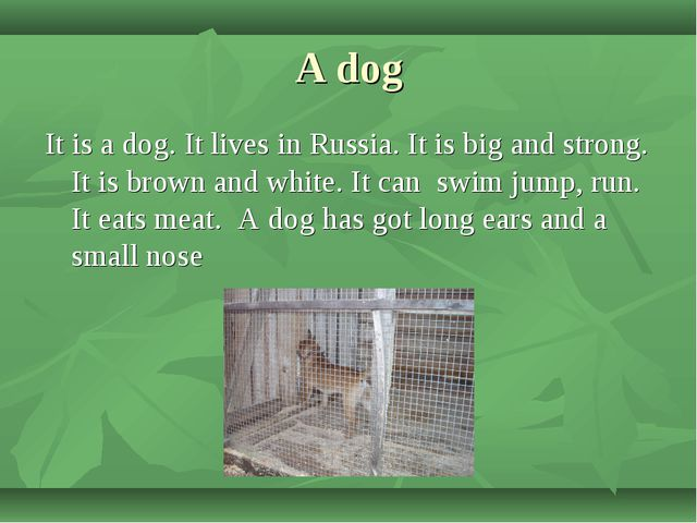 A dog It is a dog. It lives in Russia. It is big and strong. It is brown and...