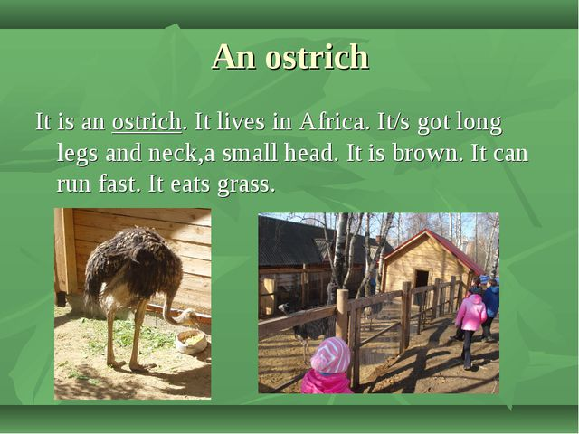 An ostrich It is an ostrich. It lives in Africa. It/s got long legs and neck,...
