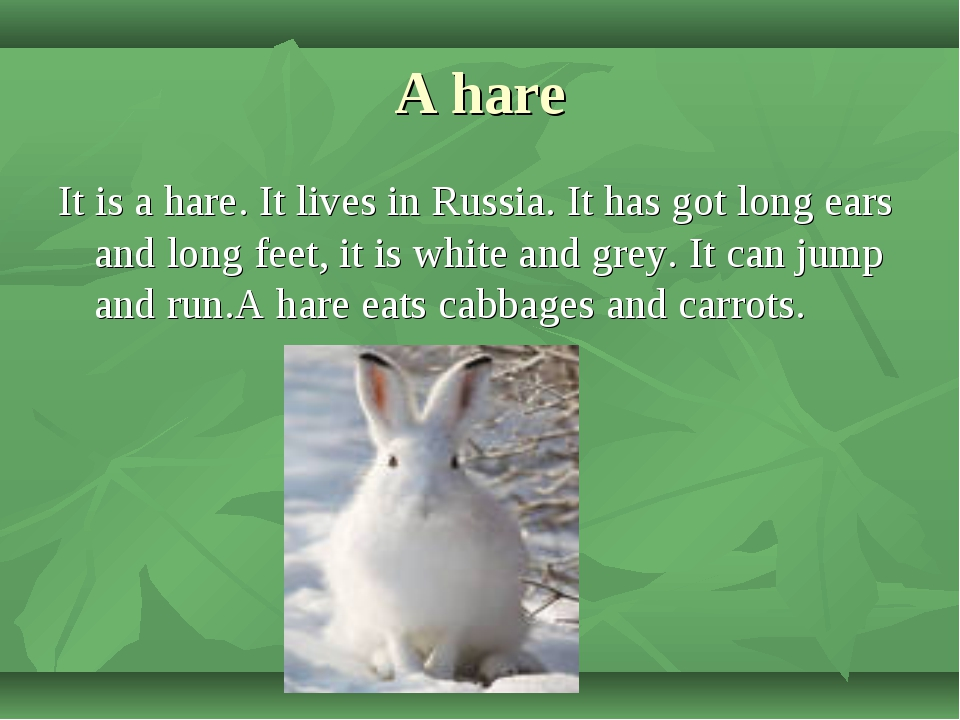 A hare It is a hare. It lives in Russia. It has got long ears and long feet,...