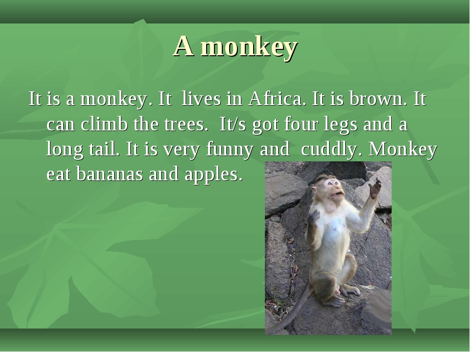 A monkey It is a monkey. It lives in Africa. It is brown. It can climb the tr...