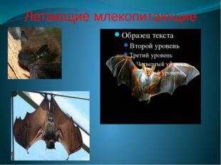Летающие млекопитающие