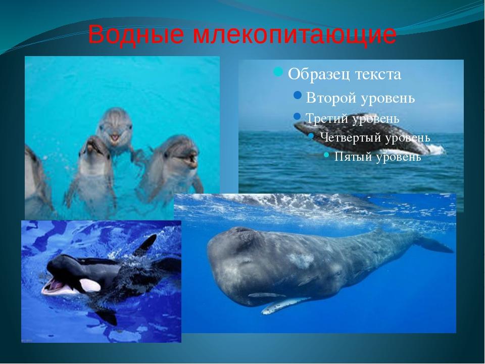 Водные млекопитающие