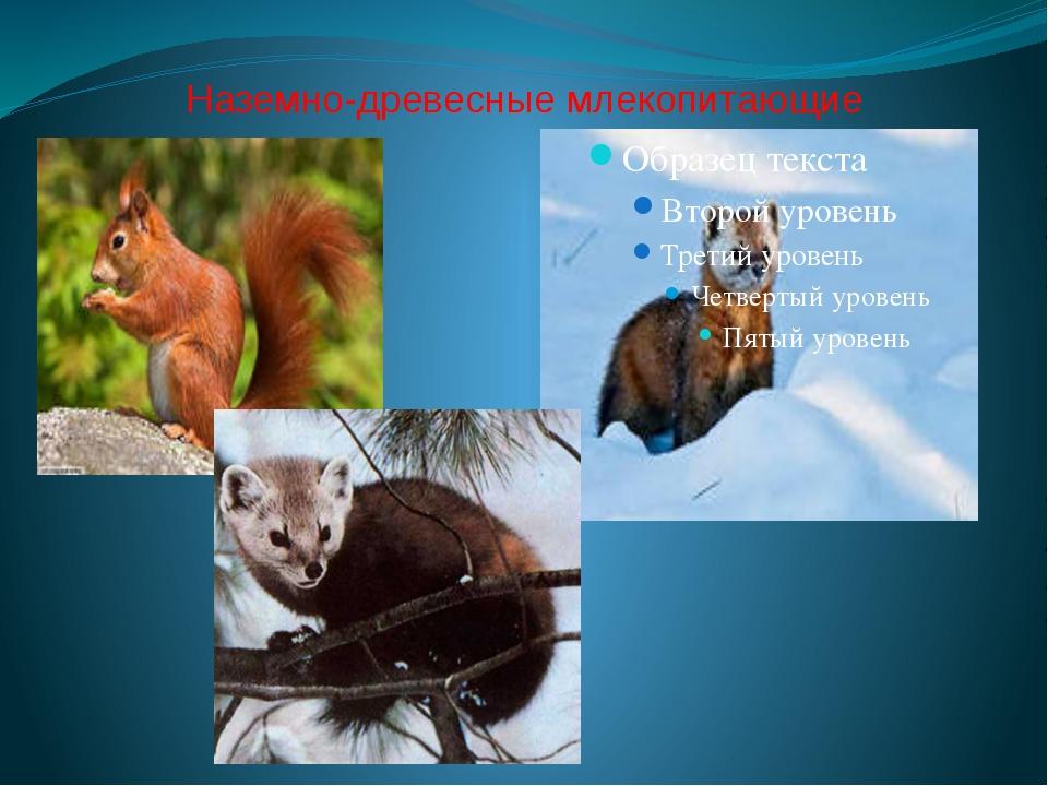 Наземно-древесные млекопитающие