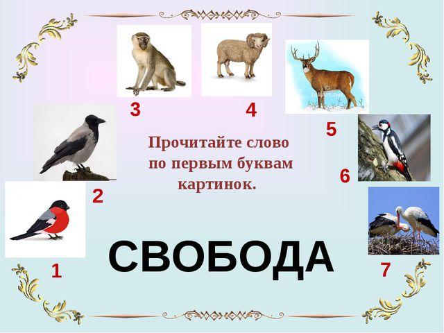 1 7 6 5 4 3 2 Прочитайте слово по первым буквам картинок. СВОБОДА