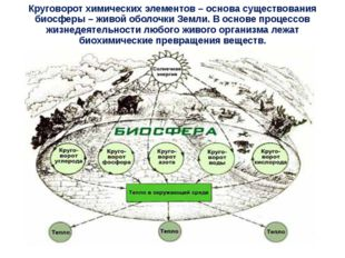 Круговорот химических элементов – основа существования биосферы – живой оболо