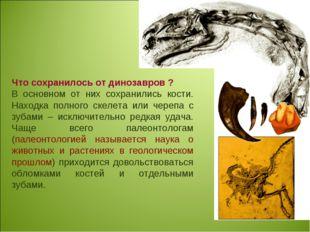Что сохранилось от динозавров ? В основном от них сохранились кости. Находка