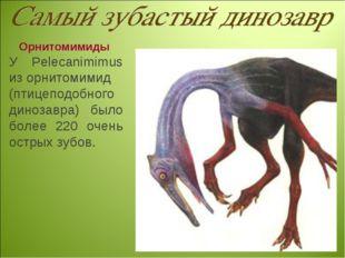 Орнитомимиды У Pelecanimimus из орнитомимид (птицеподобного динозавра) было б