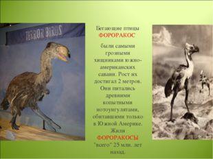 Бегающие птицы ФОРОРАКОС были самыми грозными хищниками южно-американских сав