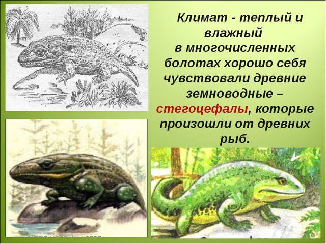 Климат - теплый и влажный в многочисленных болотах хорошо себя чувствовали др...