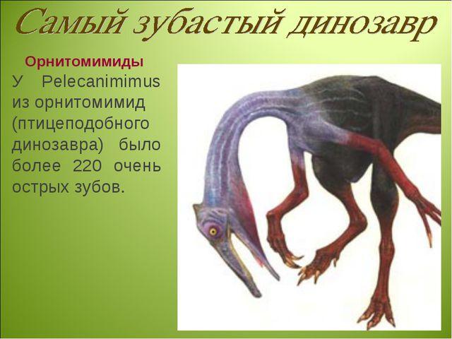 Орнитомимиды У Pelecanimimus из орнитомимид (птицеподобного динозавра) было б...