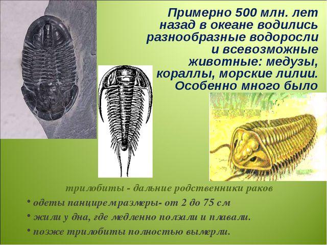 Примерно 500 млн. лет назад в океане водились разнообразные водоросли и всево...