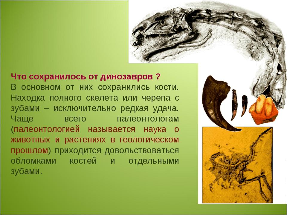 Что сохранилось от динозавров ? В основном от них сохранились кости. Находка...