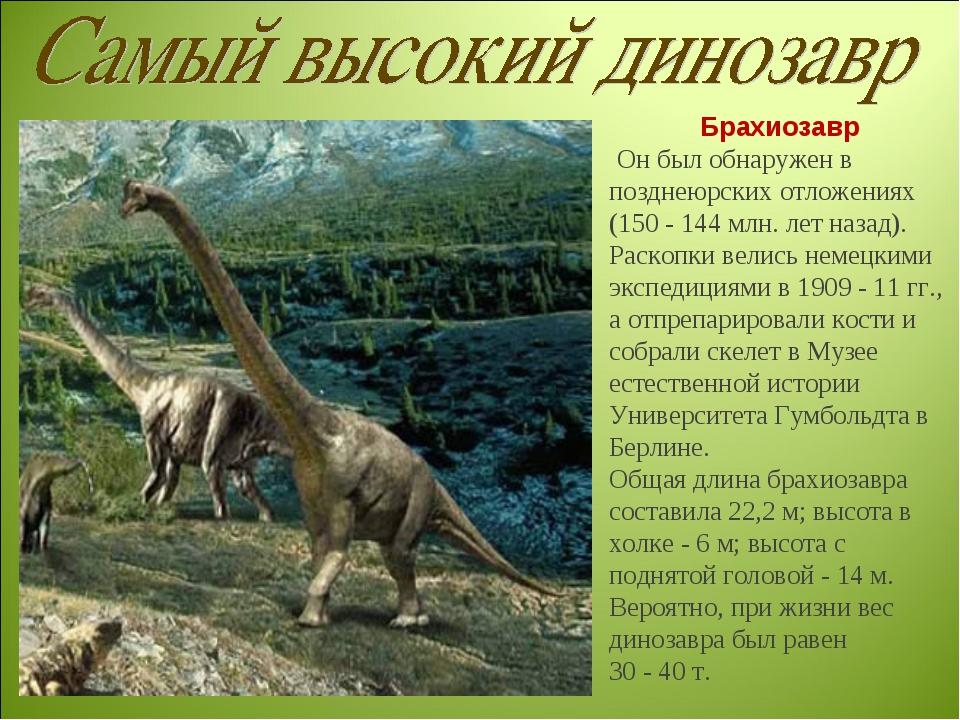 Брахиозавр Он был обнаружен в позднеюрских отложениях (150 - 144 млн. лет наз...
