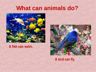 What can animals do? A fish can swim. A bird can fly.