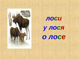 о лосе лоси у лося