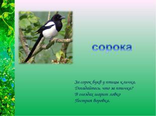 За сорок букв у птицы кличка, Догадайтесь, что за птичка? В гнездах шарит лов