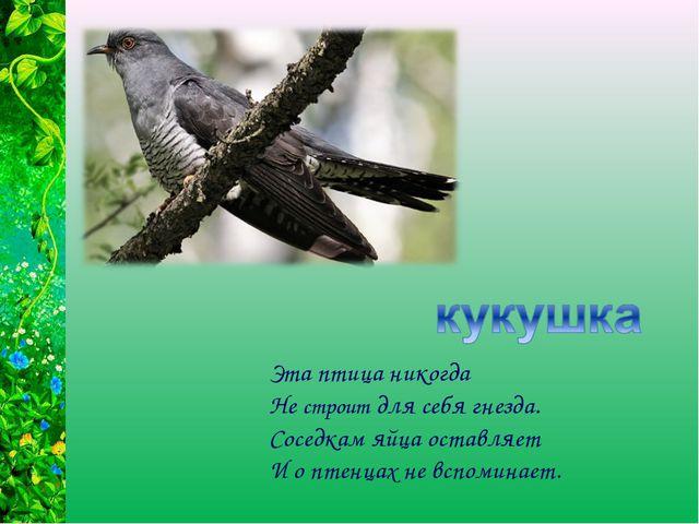 Эта птица никогда Не строит для себя гнезда. Соседкам яйца оставляет И о птен...