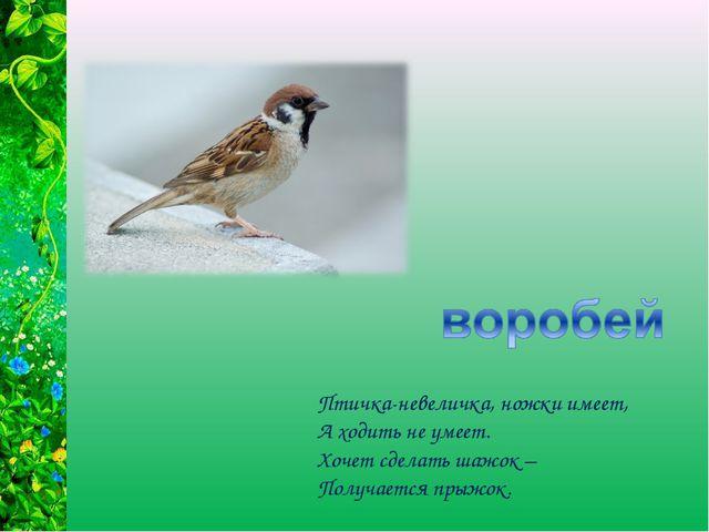 Птичка-невеличка, ножки имеет, А ходить не умеет. Хочет сделать шажок – Получ...