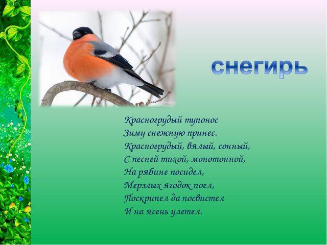 Красногрудый тупонос Зиму снежную принес. Красногрудый, вялый, сонный, С песн...