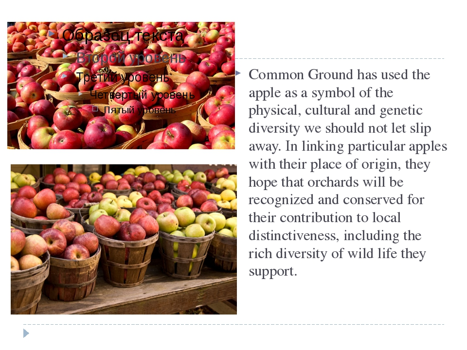 THE APPLE as a symbol Common Ground has used the apple as a symbol of the ph...