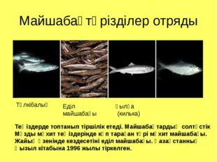 Майшабақтәрізділер отряды Түлкібалық Еділ майшабағы қылқа (килька) Теңіздерде